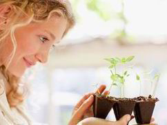 Cheer up your plants with a song, chat and massage | UK | News | Daily Express | Radio Show Contents | Scoop.it