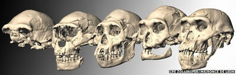Skull Fossil Suggests Simpler Human Lineage | World History | Scoop.it