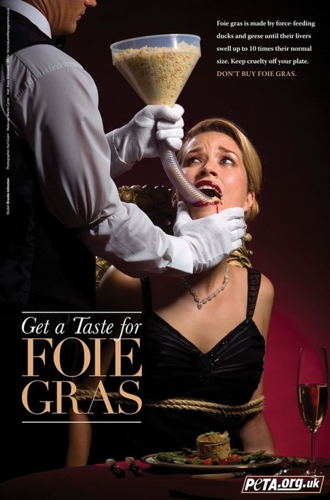 Foie Gras - The Reality Of The Cruel Production And Slaughter Processes - Narrated By Sir Roger Moore. | GarryRogers Biosphere News | Scoop.it