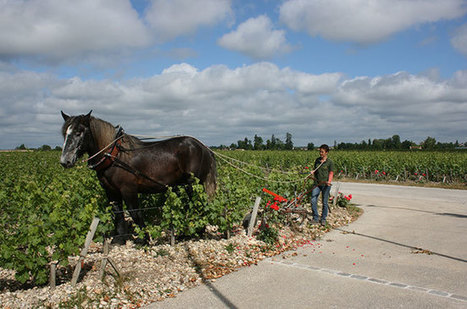 #Burgundy and #Bordeaux / French terroir: Duelling definitions | Wines of Bordeaux and south-west France | Scoop.it