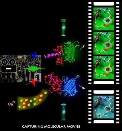 'Molecular movies' will enable extraordinary gains in bioimaging, health research | Amazing Science | Scoop.it
