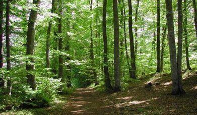 4 millions d'arbres seront plantés en 2014-2015 au Royaume-Uni | Economie Responsable et Consommation Collaborative | Scoop.it