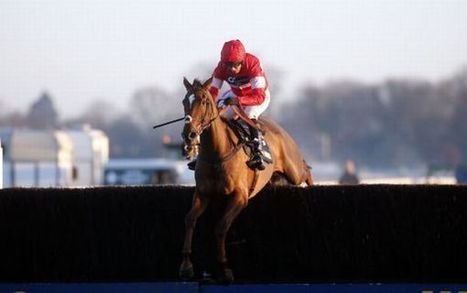Odds on Paul Nicholls' horses for Cheltenham - Horse racing with ... | Sports News | Scoop.it