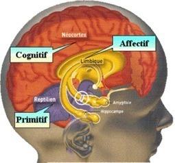 L'apport des neurosciences pour comprendre l'importance des émotions - L'atelier de l'Aristoloche | L'atelier de l'Aristoloche | Insertion professionnelle Troubles Dys | Scoop.it