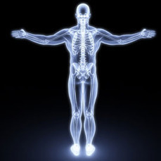 6 Virtual Tours Of The Human Body For Free Interactive Anatomy Lessons | Anatomy | Scoop.it