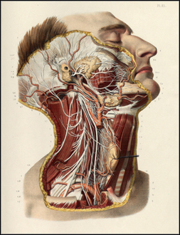 Anatomia Collection - University of Toronto Libraries | Studio Art and Art History | Scoop.it