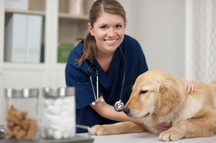 Why you Need to Vaccinate your Pet? Read On.... | Napa Valley Animal Hospital | Scoop.it