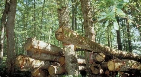 L'Inra veut améliorer la commercialisation du bois en France   Woodsurfer   Interprofession Forêt Bois des Pyrénées-Atlantiques   Scoop.it