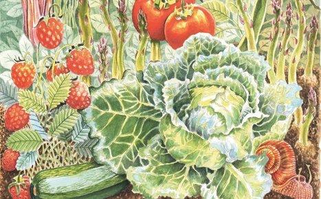 Ready to transform your vegetable garden to organic? Gardening writer Tom ... - Press Herald | Gardening | Scoop.it