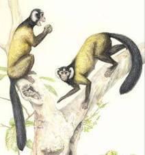 Novos fósseis primatas sugerem antepassado asiático dos humanos | Milhares de milhões de anos... a mesma Terra ! | Scoop.it
