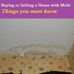 Things You Need to Know About Mold When Buying a Home - HULIQ | Real Estate Information | Scoop.it