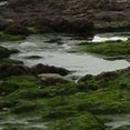 Algal Bioenergy - Synthetic Biology - a solution to algal bioenergy? - Articles - Open Innovation | SynBioFromLeukipposInstitute | Scoop.it