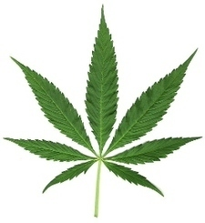 UMass Libraries acquires the archives of the National Organization for the Reform of Marijuana Laws, relatively few bad puns are made » MobyLives | Library Collaboration | Scoop.it