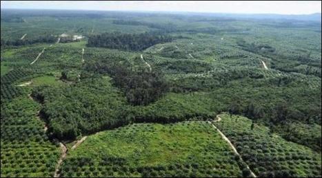 La moitié des espèces d'arbres serait en sursis | Réseau Tela Botanica | Scoop.it
