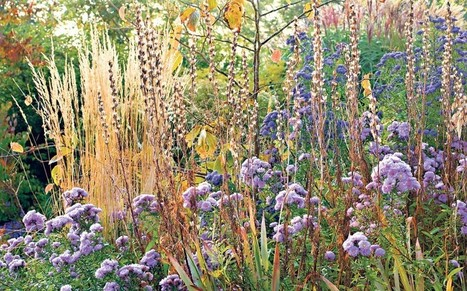 How to make your garden look glorious in autumn - Telegraph.co.uk | Lavender | Scoop.it
