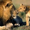 Experience thrills in the emerald lap of nature with India tour | Wildlife tours in India | Scoop.it