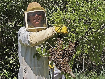 Stillwater: Swarm Chasers preserve, protect bees - Pioneer Press | phytopharmaceuticals, pollinators, biodiversity | Scoop.it