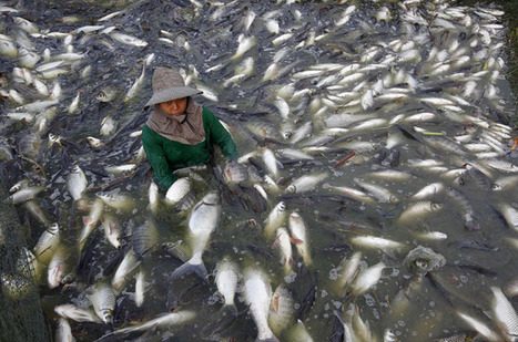 How many more fish in the sea? | OUR OCEANS NEED US | Scoop.it