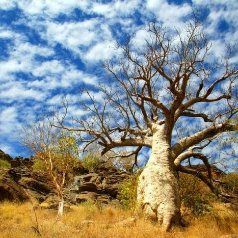 Why don't we have more native deciduous trees in Australia? | Geography Resources | Scoop.it