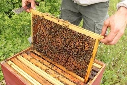 Le miel d'euphorbe, un produit du terroir très prisé au Maroc - libération | terroir maroc | Scoop.it