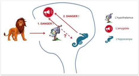 Pourquoi le cerveau de votre enfant stressé perd ses moyens : 3 étapes pour en sortir ! | Massages-bien-être | Scoop.it