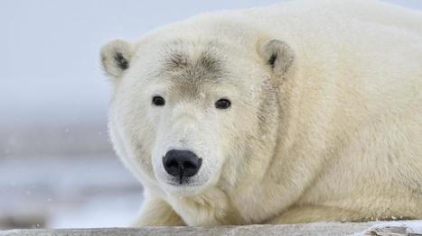 Une espèce animale sur six menacée par le réchauffement climatique | Toxique, soyons vigilant ! | Scoop.it
