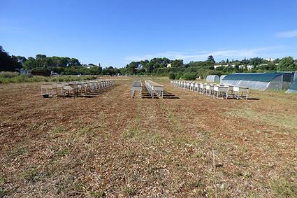 TalVeg2 : des solutions de végétalisation innovantes pour limiter l'érosion des sols et améliorer l'aménagement | Les colocs du jardin | Scoop.it