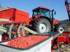 Mais-Saatgut: Rabatt für Frühbucher   agrar   Scoop.it