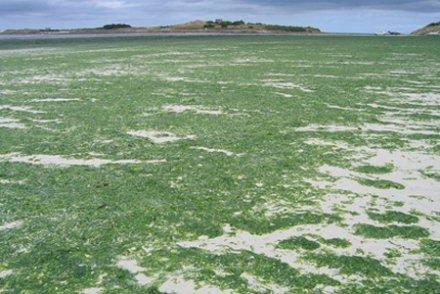 La méthanisation : une solution pour endiguer les algues vertes ? - Terra eco | Agr'energie | Scoop.it