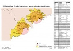 Xylella fastidiosa: another focus found in Alpes Maritimes (FR) | Pest Alerts | Scoop.it