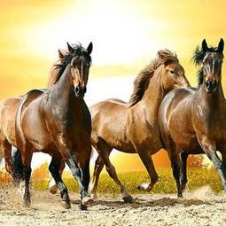 10 Curiosidades de los caballos que no ¿Sabías? | Datos Curiosos de la Ciencia y el Mundo | Scoop.it