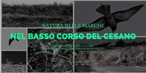 Natura nelle Marche: Il basso corso del fiume Cesano | Le Marche un'altra Italia | Scoop.it
