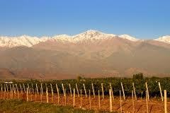 Anthony Rose: 'It took a handful of outsiders, treating malbec with respect, to reveal the wine's potential for greatness' | Vitabella Wine Daily Gossip | Scoop.it