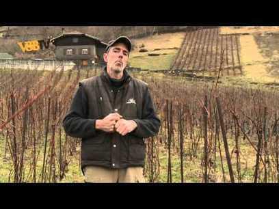 Le Gringet : vin de Savoie cultivé en biodynamie | Savoie | Scoop.it