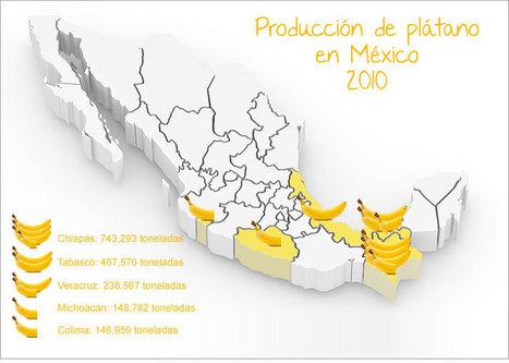 Producción en México y el mundo | El plátano | | Platano-Banana (Musa Cavendishii) | Scoop.it