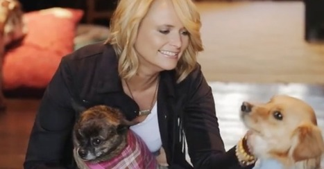 Take a look inside Miranda Lambert's personal doggy heaven | Country Music Today | Scoop.it