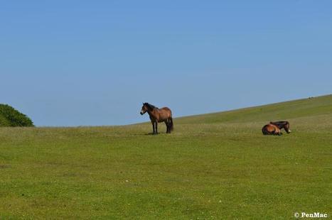 Bien-être du cheval : mieux comprendre la dynamique de troupeau au pré - Vetitude | éthologie équine | Scoop.it