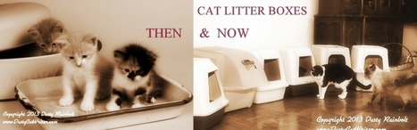 Cat Wisdom 101 | The History of Cat Litter and Litter Boxes | All about cats | Scoop.it