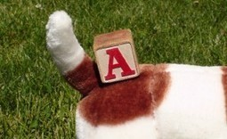 Training is Simple as A-B-C | Modern dog training methods and dog behavior | Scoop.it