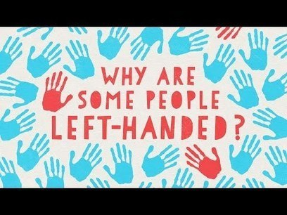 Why are 10% of the world population left-handed? What are the advantages / disadvantages? | Amazing Science | Scoop.it