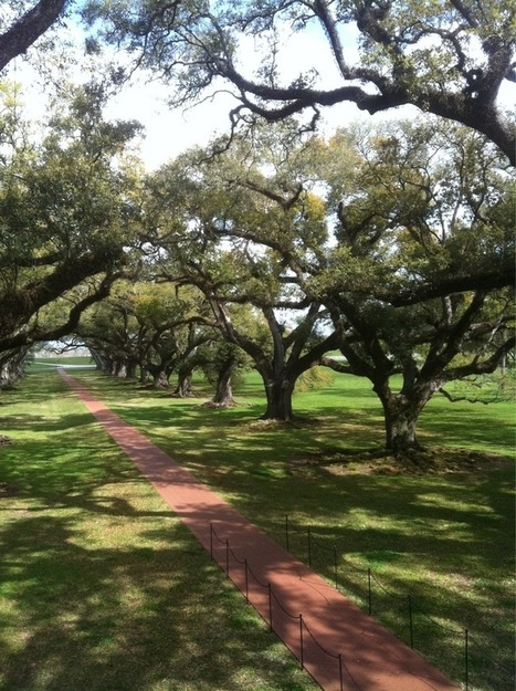 from Erin Shaw Street! | Oak Alley Plantation: Things to see! | Scoop.it