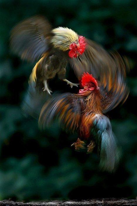 Las espectaculares fotografías de naturaleza de Sam Lim | Fotografías: miradas a través de una lente. | Scoop.it