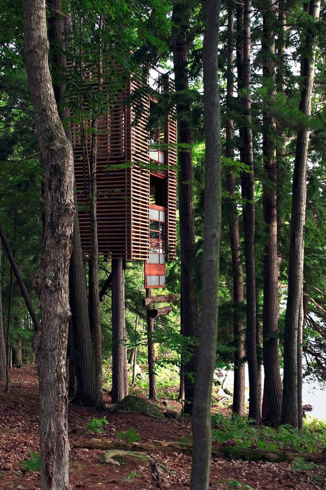 Las casas de árbol más asombrosas jamas antes vistas : Noti.in - Lo más interesante de la Red | Noti.in | Scoop.it