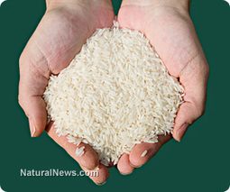 WARNING: Unapproved GMO genetically-modified rice trials in U.S. have contaminated the world's rice supply [EXTREMELY TOXIC TO HUMANS] | Freight Forwarding from JNPT | Scoop.it