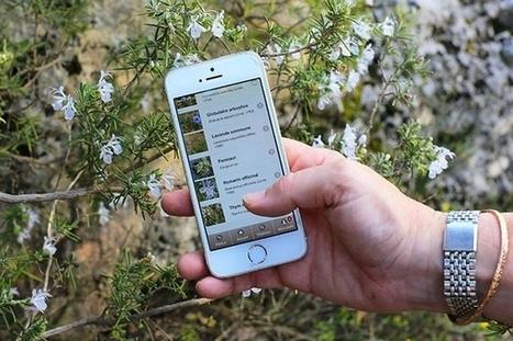 EcoBalade : une application pour découvrir la faune et la flore lors des randonnées | Développement durable, généralité et curiosité | Scoop.it