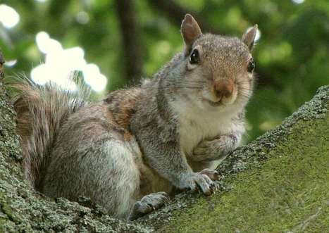 New Squirrel Virus Suspected In Three Human Deaths | Virology News | Scoop.it