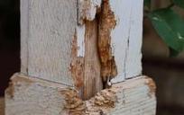 Retour sur la réglementation anti-termite en France - Batiweb.com (Communiqué de presse) | Maisons Bois Basse Conso | Scoop.it