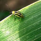 Les insectes, bouclier écologique de l'agriculture - Journal de l'environnement | EntomoNews | Scoop.it