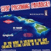 Do you want to vacation in the GMO chemical testing capital of the world? Tell Hawaii leaders it's time to stop allowing Monsanto, Syngenta and the big biotech companies to Stop Poisoning Paradise! | Plant Based Transitions | Scoop.it