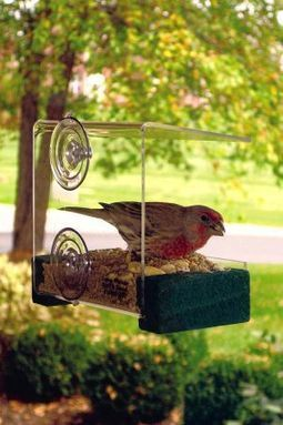 For the birds: Protect birds with safer buildings and windows - Billings Gazette | Conservation | Scoop.it
